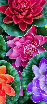 Iphone X Wallpaper Hd 1080p Flower