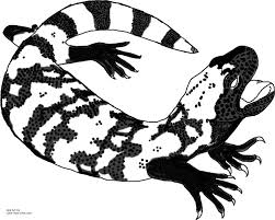 Small Picture Free Lizard Coloring Pages Coloring Coloring Pages
