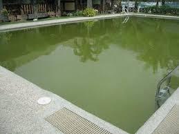 el nido garden beach resort. el nido garden beach resort: the green pool at resort