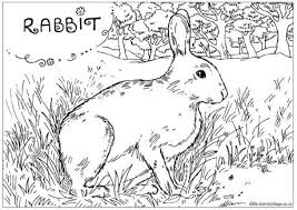 Small Picture British Wildlife Colouring Pages 6314 Bestofcoloringcom