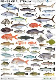 Poster Temperate Fish Fish Chart Salt Water Fish Fish