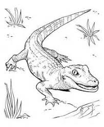 Small Picture Baby Crocodile Coloring Pages Coloring Coloring Pages