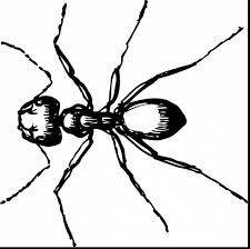 Small Picture excellent clip art for carpenter ant with ant coloring page