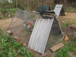 Kitchen Garden Hens Keeping Chickens In Your Garden Sa Garden And Home