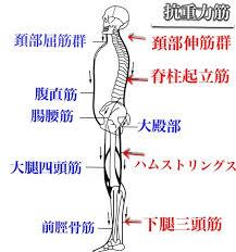 「重力 姿勢」の画像検索結果