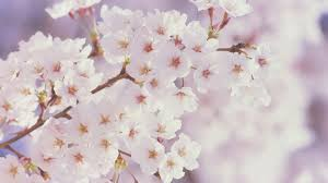 spring nature backgrounds. Spring Nature Wallpapers Tumblr Backgrounds