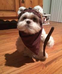 25 best ideas about ewok dog costume on names