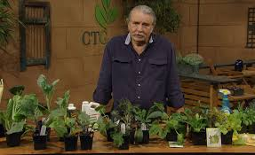 fall vegetable seeds and transplants john droole central texas gardener