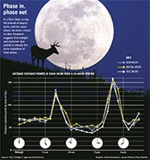 25 Problem Solving Free Deer Moon Phase Chart