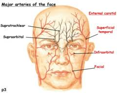arteries of the face test 1506 quizlet
