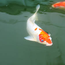 freshwater and coldwater fish