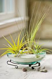 How To Decorate With Air Plants Interior Design Styles And Color