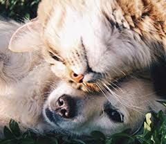 Vous demandez au petsitter de séjourner chez vous afin que l'animal ne. Service Garde D Animaux A Domicile Voisins Garde D Animaux Jobbing Entre Particuliers Kiwiiz