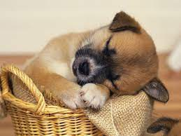 You Wallpaper Dogs Animals Wallpapers ...