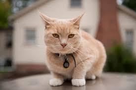 cat. Wonderful Cat Intended Cat A