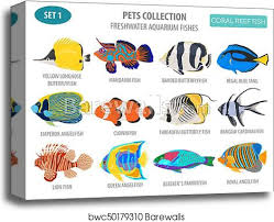 Freshwater Fish Identification Chart Freshwater Aquarium Fish Breeds Icon Set Flat Style Isolated On White Coral Reef Create Own Infographic About Pet Canvas Print