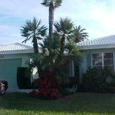 fan palm trees. european fan palm, fishtail palm trees