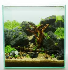 Aquascape Designs San Francisco Step Layout 30cm 12in Cube Way To Happiness By Adrie Baumann