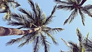 Group of Header Overlay Palm Trees
