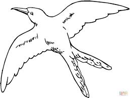 Coloriage Colibri Hirondelle Qui Vole Coloriages Imprimer