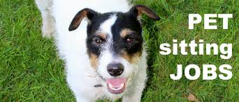 sitting jobs pet sitting jobs and dog walking services how much can you earn