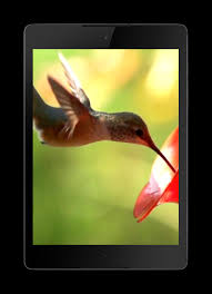 hummingbird live wallpaper screenshot 3