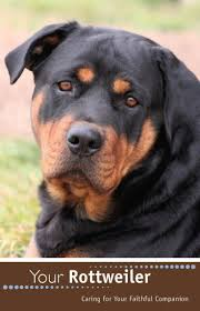 Small Picture 302 best Rottweilers images on Pinterest Rottweilers Animals