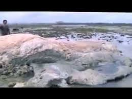 sea monster found 2014. Brilliant Sea Inside Sea Monster Found 2014 A