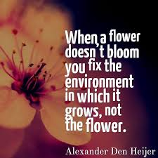 Quotes About Flowers Blooming Unique AnneKcam When A Flower Doesn't Bloom You Fix The Environment In