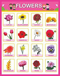 Spectrum Pre School Kids Learning Laminated Flowers Name