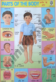 Parts Of The Body Body Parts Chart Number 46 Minikids In