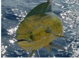 Fishing Charts Captain Segulls Nautical Fishing Charts