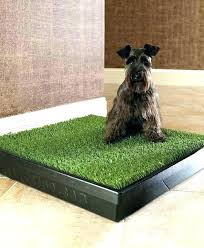 diy dog potty area dog diy outdoor dog potty area diy dog potty