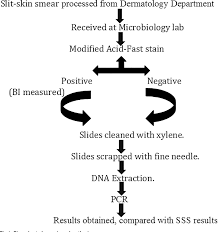 Figure 1 From Evaluation Of Polymerase Chain Reaction Pcr