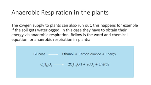 anaerobic respiration in the plants