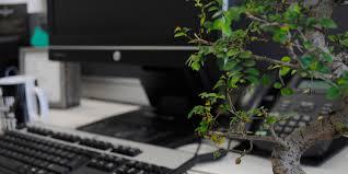 office bonsai. add a bonsai to your office interior design r