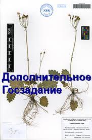 Диссертационный совет Центральный сибирский ботанический сад СО РАН Дополнительное Госзадание