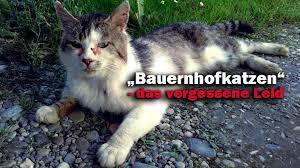 Das Traurige Schicksal Der Bauernhofkatzen Animals United Ev