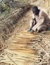 African millet