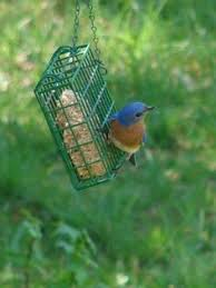many suet recipes so you can make your own