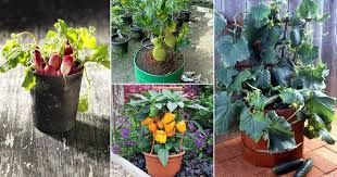 20 of the best vegetables to grow in