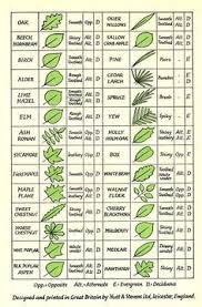 Tree Identifier Tree Leaf Identification Tree