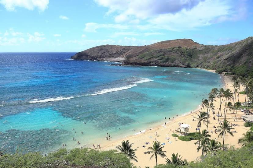 Tree Expert Hawaii, US