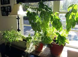 hydroponic herb garden. Herb Garden Indoor Kits Hydroponic Rhelpicodistcom Countercrop A Smart For Your Countertop Youtuberhyoutubecom
