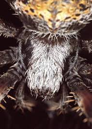 Hentz Orb Weaver #4 - Aubrey Moat - Photography, Animals, Birds, & Fish,  Bugs & Insects, Arachnids, Spider - ArtPal