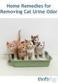 removing cat urine odor