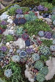 Small Picture The 25 best Pebble garden ideas on Pinterest Succulent