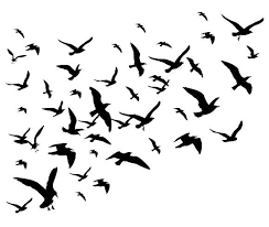 flock of birds silhouette. Plain Flock Flying Birds Flock Silhouette By MicroOne On Creativemarket Inside Flock Of Birds Silhouette