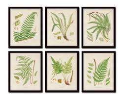 fern print wall art