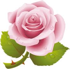 Rosa perdida